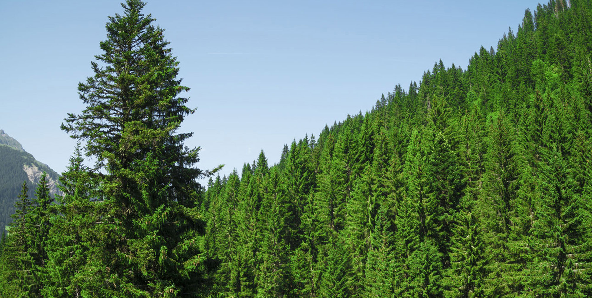 EnviroVision Solutions | ForestWatch Environmental Monitoring System